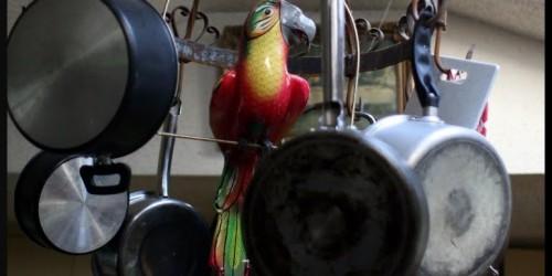 kitchenbird
